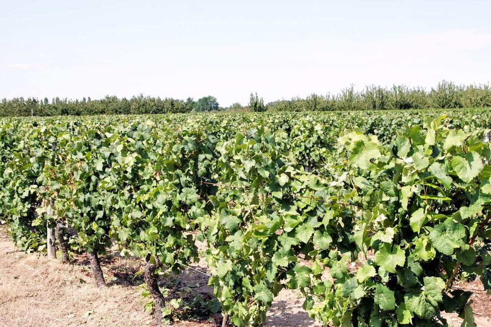Vignerons de la grand maison orleans aperitif a base de vin for Aperitif maison a base de vin